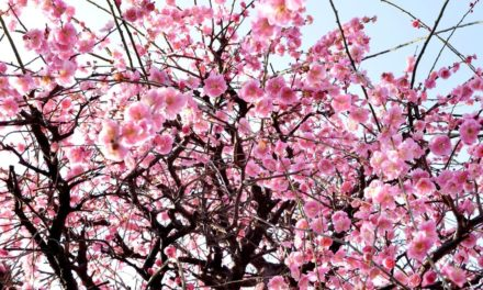 Climat et saisons au Japon